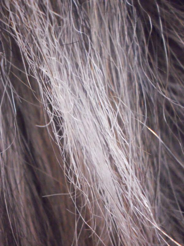 cabelo destruído